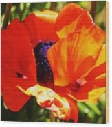 Oriental Poppy Series  No.1 Wood Print
