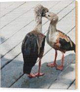 Orinoco Geese Touching Heads On A Boardwalk Wood Print