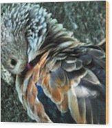 Orinoco Goose  Wood Print
