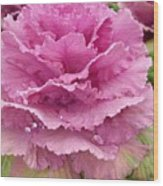 Ornamental Cabbage Wood Print