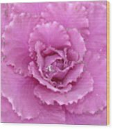Ornamental Cabbage With Raindrops - Square Wood Print