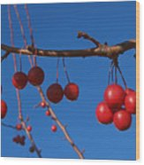 Ornamental Crabapple Branch Wood Print