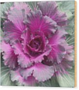 Ornamental Red Cabbage Wood Print