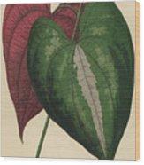 Ornamental Yam  Dioscorea Discolor Wood Print