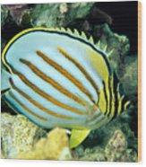 Ornate Butterflyfish Wood Print