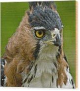 Ornate Hawk Eagle Wood Print