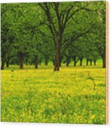 Osceola Landscape Wood Print