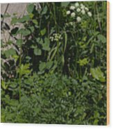 Osha And Valarian Wood Print