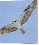 Osprey 1-30-11 Wood Print