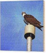 Osprey 1 Wood Print