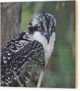 Osprey 31 Wood Print