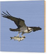Osprey And Catch Wood Print