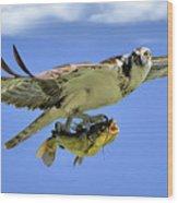 Osprey And Catfish Wood Print
