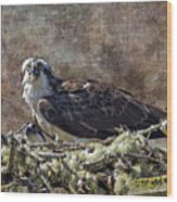 Osprey And Young - Feeding Wood Print