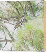 Osprey Applesauce Wood Print