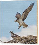 Osprey Approach Wood Print