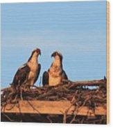 Osprey At Home Wood Print