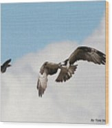 Osprey Botherd By Grackle Wood Print