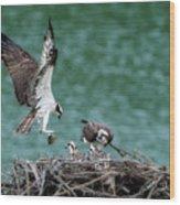 Osprey Bringing Fodd To The Babies Wood Print