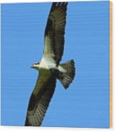 Osprey Carrying A Fish Wood Print