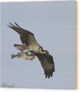Osprey Catches A Fish Wood Print