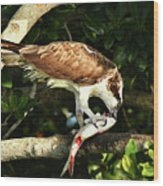 Osprey Dining Wood Print