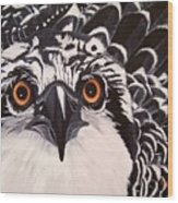 Osprey Eyes  Wood Print