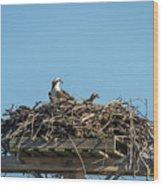 Osprey Family 8283 Wood Print