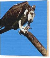 Osprey Feeding 014 Wood Print