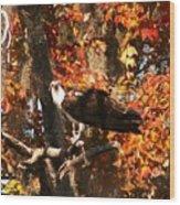Osprey In Fall Wood Print