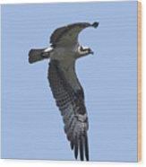 Osprey In Flight 2 Wood Print