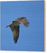 Osprey In Flight 3 Wood Print