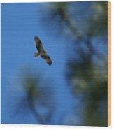 Osprey In Flight 8 Wood Print