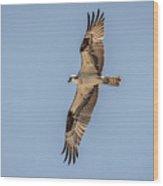 Osprey In Flight At Sunset Wood Print
