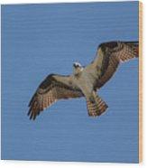 Osprey In Flight Pickwick Dam Tennessee 031620161594 Wood Print