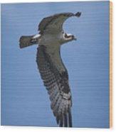 Osprey In Flight Wood Print