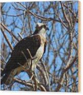 Osprey In Spring Wood Print
