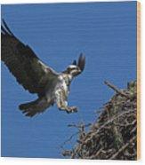 Osprey Landing Approach - Oregon Coast Wood Print