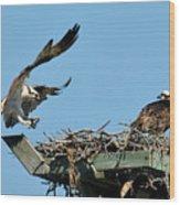 Osprey Landing In Nest Wood Print