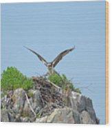 Osprey Landing On A Nest Wood Print
