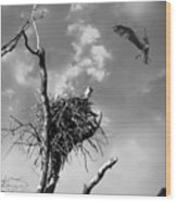 Osprey Nest Wood Print