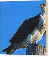 Osprey On A Pole Wood Print