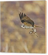 Osprey On The Wing With Fish Wood Print