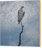 Osprey On Top Of The World Wood Print