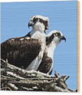 Osprey Pair Wood Print