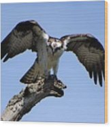 Osprey Power Wood Print