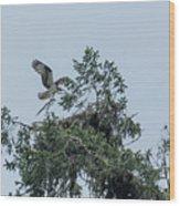 Osprey Reinforcing Its Nest 2017 Wood Print