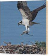 Osprey Returning Home Wood Print