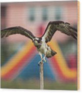 Osprey Salutes The Busch Eagle Wood Print