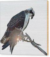 Osprey Silhouette Wood Print